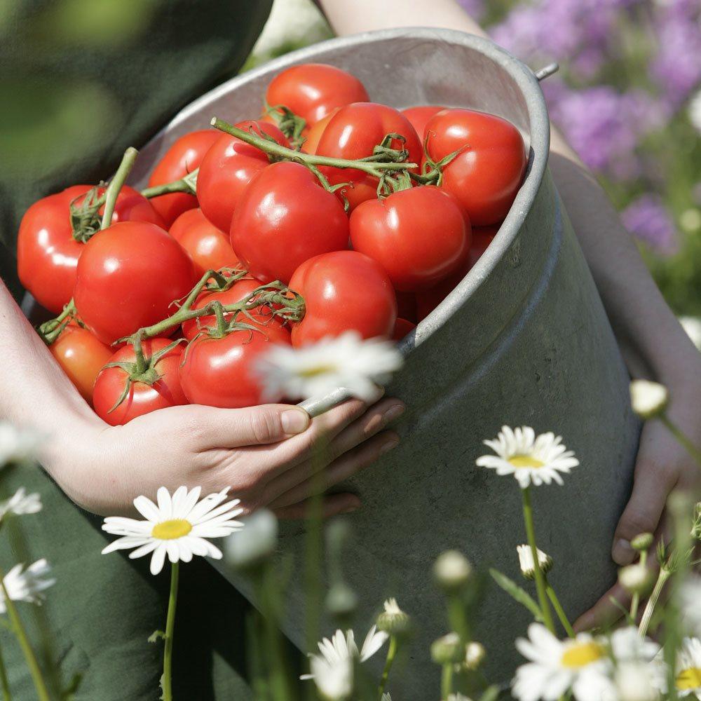 la-tomate-une-star-facile-a-conserver