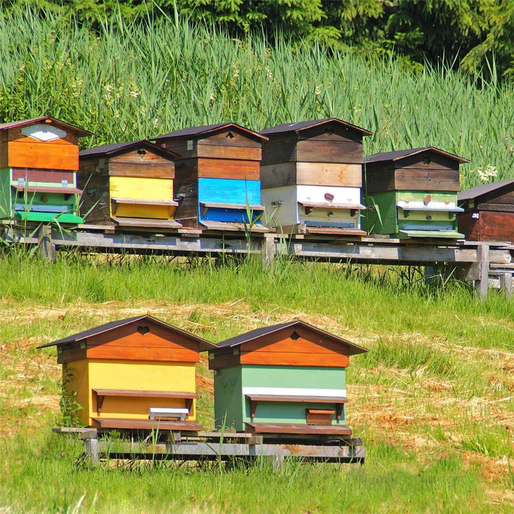 le-printemps-a-la-ruche-saison-de-tous-les-enjeux