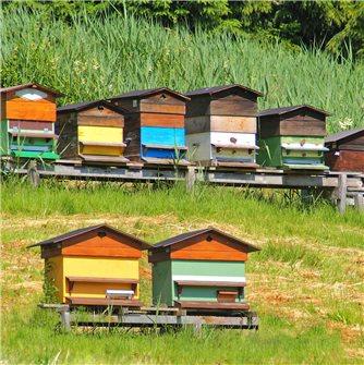 Le printemps à la ruche : saison de tous les enjeux.